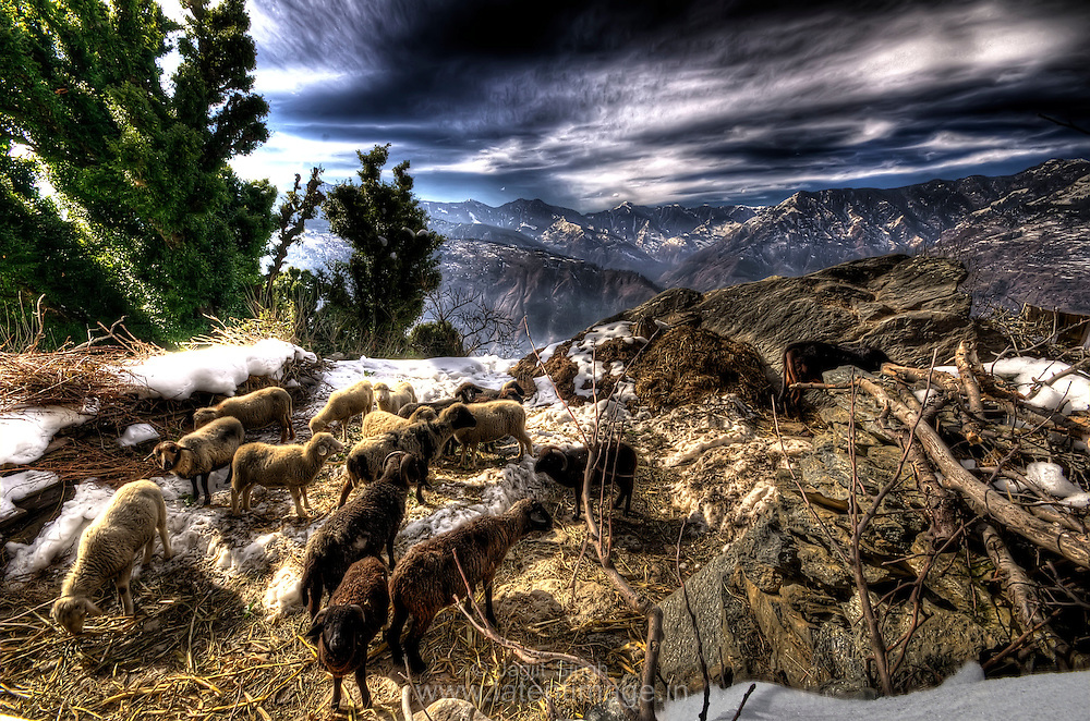 Sheeps on top of hill in a village at Banjar Valley