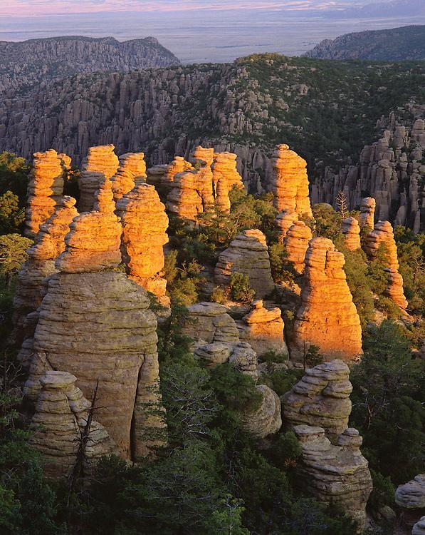 0103-1000LVT ~ Copyright: George H. H. Huey ~  Standing rocks [rhyolite formations]. Sunrise, Heart-of-Rocks area, along the Echo Canyon Trail. Chiricahua National Monument, Arizona.