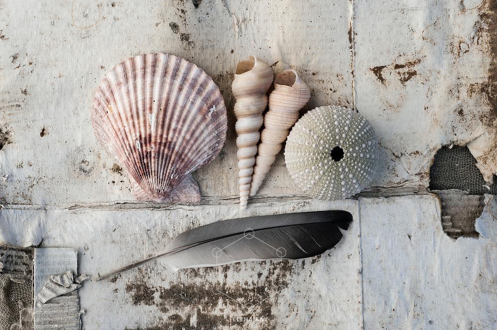 Seashells On Weathered Cardboard