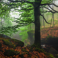 Misty forest at spring time