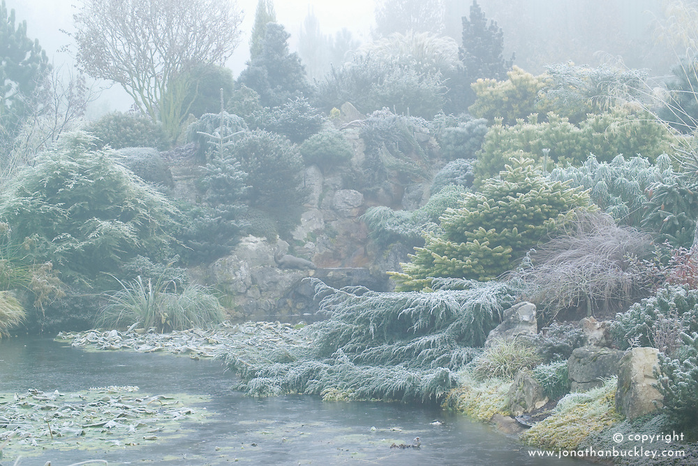 Frozen pond and rock garden planted with conifers in John Massey's garden on a frosty winter's morning. Design: John Massey, Ashwood Nurseries