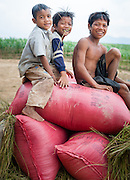 Three boys on top of harvest bags (Vietnam)
