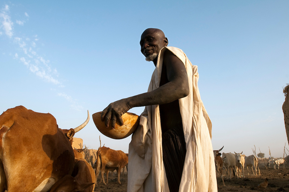 A village elder milks one of his cows for the morning meal in Gorgol province..Boitieck Ehel Aly, Mauritanie. 06/03/2011..Photo © J.B. Russell