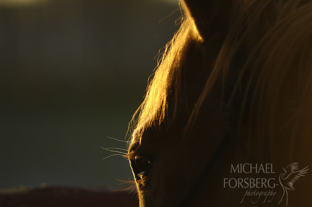 High Plains, shortgrass prairie region - Front Range, CO..Horse in corral early morning....