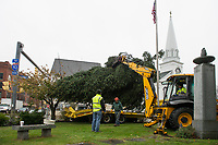 Laconia Public Works workers Steve St Pierre, Lucas Lamos and Steve Smith operating the backhoe prepare to unload the 30' balsam fir being placed at Veterans Square Thursday morning for the upcoming holiday season.  (Karen Bobotas/for the Laconia Daily Sun)