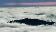 A mountain top, close to the Pacific Ocean and full of trees, stands above the clouds in Eureka, CA.
