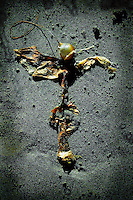 A natural seaweed formation resembling a scarecrow.