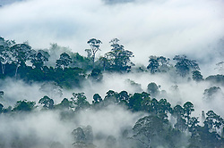 General view of Danum Valley Conservation Area, on August 5, 2019 near Lahad Datu city, State of Sabah, North of Borneo Island, Malaysia. Palm oil plantations are cutting down primary and secondary forests vital as habitat for wildlife including the critically endangered Bornean and Sumatran orangutans. Photo by Emy/ABACAPRESS.COM