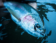 Deschutes Steelhead - Fish The Swing Photos - Jeff Hickman, Fly Fishing