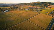 Montinore winery & estate Vineyard, Willamette Valley, Oregon