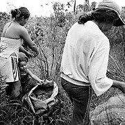A young girl helps her mother and a neighbour as they pick coca leaves on a cooperative plantation on the banks of the Rio Putumayo.<br />
