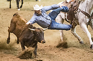 Steer wrestler Lafe Lockhard Nelson makes his run during slack at the Bismarck Rodeo on Saturday, Feb. 3, 2018. This photo and more from most runs are available at Bobwire-S.com.