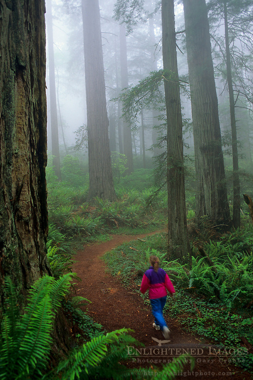 Woman hiker on trail through forest in fog, Redwood National Park, California