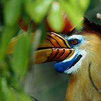 NGM Hornbills