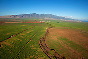 Sugar Cane Field, Maui, Hawaii