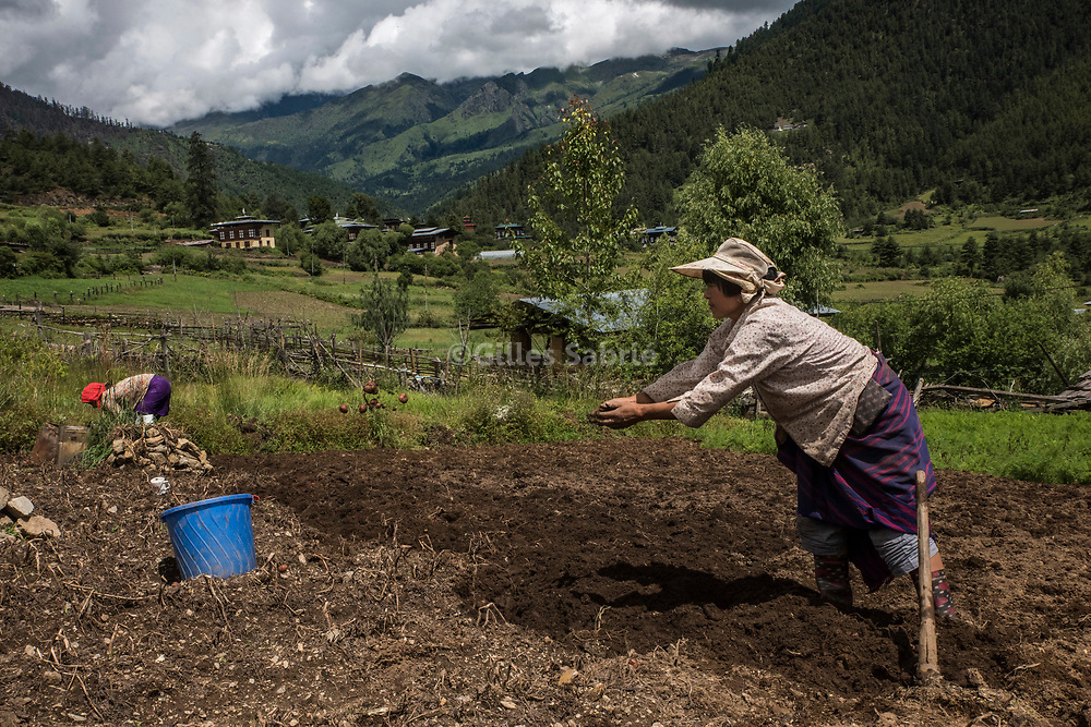 For a story by Steven Lee Myers, Bhutan<br /> Haa, Bhutan, August 3rd, 2017<br /> Farmers harvesting potatoes in the Haa valley, close to the disputed border between China and India. Locals in the valley also draw incomes by smuggling Chinese goods into Bhutan.  They go on a 1 day trek to the nearest Tibetan town to buy goods and bring them back on horseback. China has shut down traffic between the two countries since the border dispute escalated last month, leading to showdown between India and China. <br /> Gilles Sabri&eacute; pour The New York Times