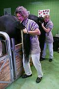 Vienna, Austria. Veterinärmedizinische Universität Wien (Vetmeduni Vienna).<br /> Gynecologic examination at the Department/Clinic for Companion Animals and Horses (Department/Universitätsklinik für Nutztiere und öffentliches Gesundheitswesen in der Veterinärmedizin).