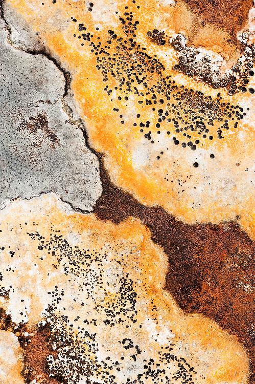 Lichens on rock, Torridon, Scotland
