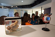 Linz, Cultural Capital of Europe 2009. Ars Electronica Center. Level -3: Main Gallery. New Views of Humankind. BioLab.
