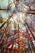 Low angle view of beech trees and other deciduous trees on a autumn day