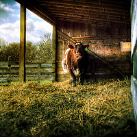 A cow in a cow shed with hay