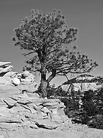 A Black & White Landscape from the eastern side of Zion National Park.