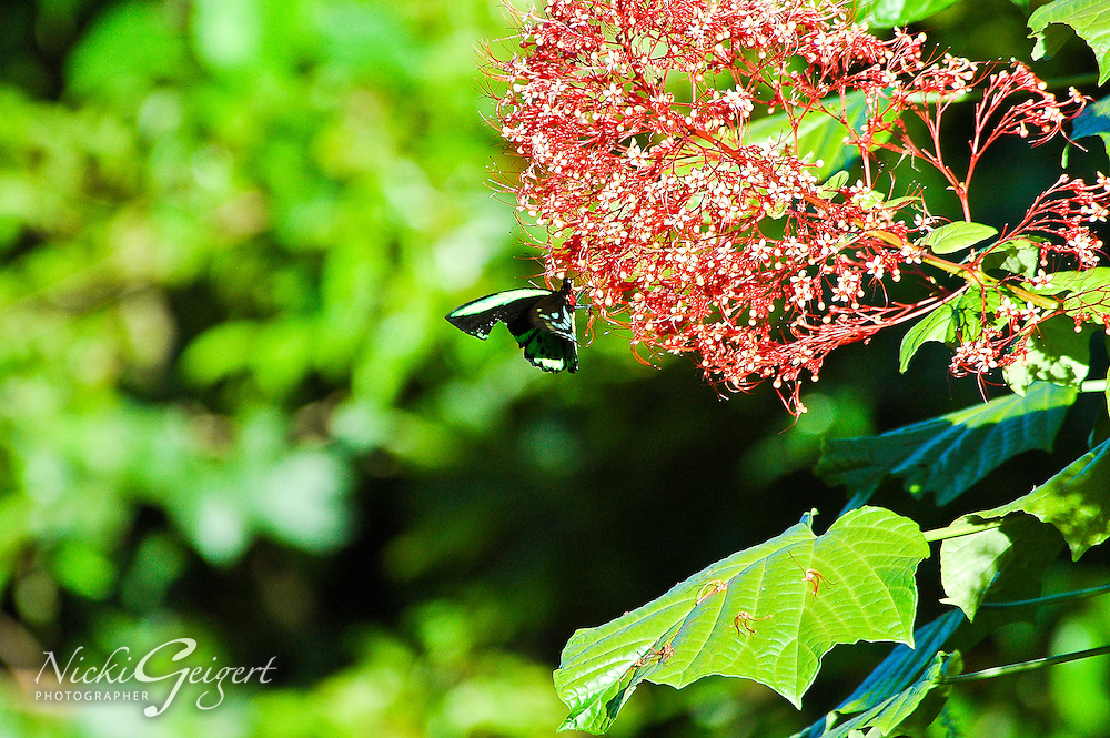 Closeup of a butterfly on flowering plant with green leaves. Wildlife and nature photography prints for sale. Fine art photography wall art, stock images.