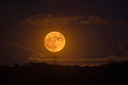 Supermoon rising over Parc Collserola, near Sant Cugat del Valles, Barcelona, November 14th, 2016. The moon won't be this close again until 2034. The last time the moon was so close was in 1948.
