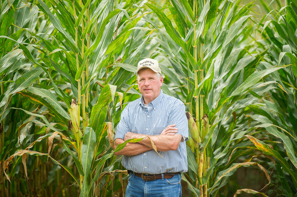 Farmer standing in front of very tall corn plants<br /> Woodbine MD