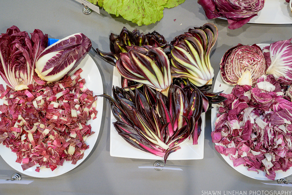 Radicchio, Cichorium intybus Showcase: Chioggia, Variegata di Lusia, Treviso<br /> Seed Co Rep: Linda Fenstermaker, Osborne Quality Seeds Farmers: Wild Roots Farm and Boldly Grown Farm Advocate: Cassie Woolhiser, Chicory Week<br /> Chefs: Devon Chase, Enoteca Nostrana and Daniel Green, Submarine Hospitality