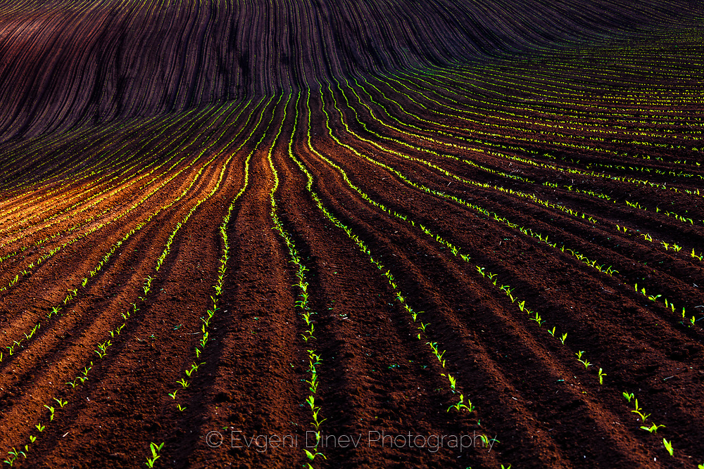 Spring Furrows
