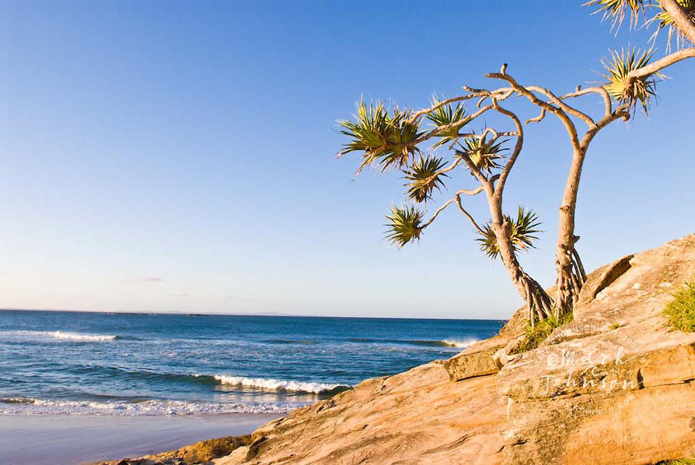 Pandanus trees on Cylinder Headland, N. Stradbroke Island, Queensland, Australia
