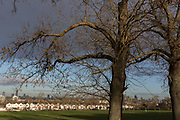 100 year-old ash trees bordering Ruskin Park and in the distance, Edwardian period homes and a London cityscape beyond, on 2nd February 2018, in south London, England.
