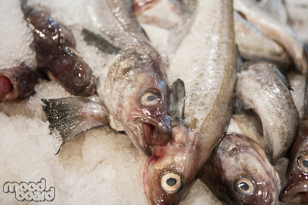 Close-up of fish in ice