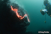 "videographer Shane Turpin films pillow lava erupting underwater at Kilauea Volcano, Hawaii Island ("" the Big Island ""), Hawaii, U.S.A. ( Central Pacific Ocean ) MR 352"