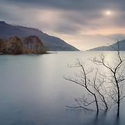 Submerged tree and Tarbet Isle, Loch Lomond