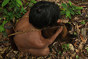 Huaorani Indian Oña Yate with a Woolly monkey that he hunted with his blowgun. Gabaro Community. Yasuni National Park.<br /> Amazon rainforest, ECUADOR.  South America<br /> He is tying it up with a vine so it it easier to carry.<br /> This Indian tribe were basically uncontacted until 1956 when missionaries from the Summer Institute of Linguistics made contact with them. However there are still some groups from the tribe that remain uncontacted.  They are known as the Tagaeri & Taromenani. Traditionally these Indians were very hostile and killed many people who tried to enter into their territory. Their territory is in the Yasuni National Park which is now also being exploited for oil.