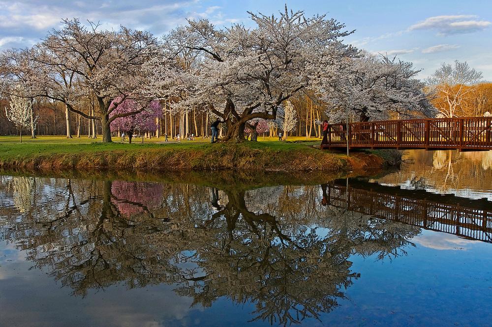 Nomahegan Park in Spring