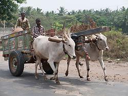 Bullock cart on the road, Mysore