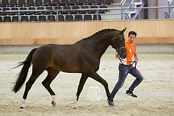 Brouwer Kirsten, NED, Ferdeaux<br /> Longines FEI/WBFSH World Breeding Dressage Championships for Young Horses - Ermelo 2017<br /> © Hippo Foto - Leanjo De Koster<br /> 02/08/2017
