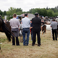 Checking out the talent at the Spancilhill Horse Fair on Friday.<br />