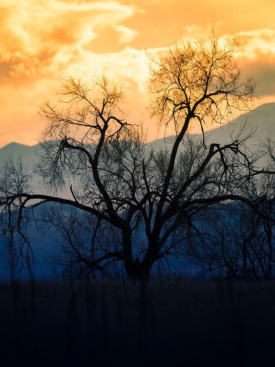 A tree silhouette against a dramatic sunset.<br />
