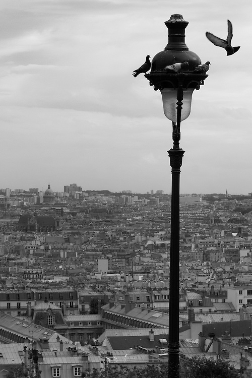 """Black and white photograph of doves flying over Paris by Karl R Lilliendahl. This photo is available as Open and Limited Edition Giclee Print in four different sizes. Click on """"Get Print"""" to see more details."""