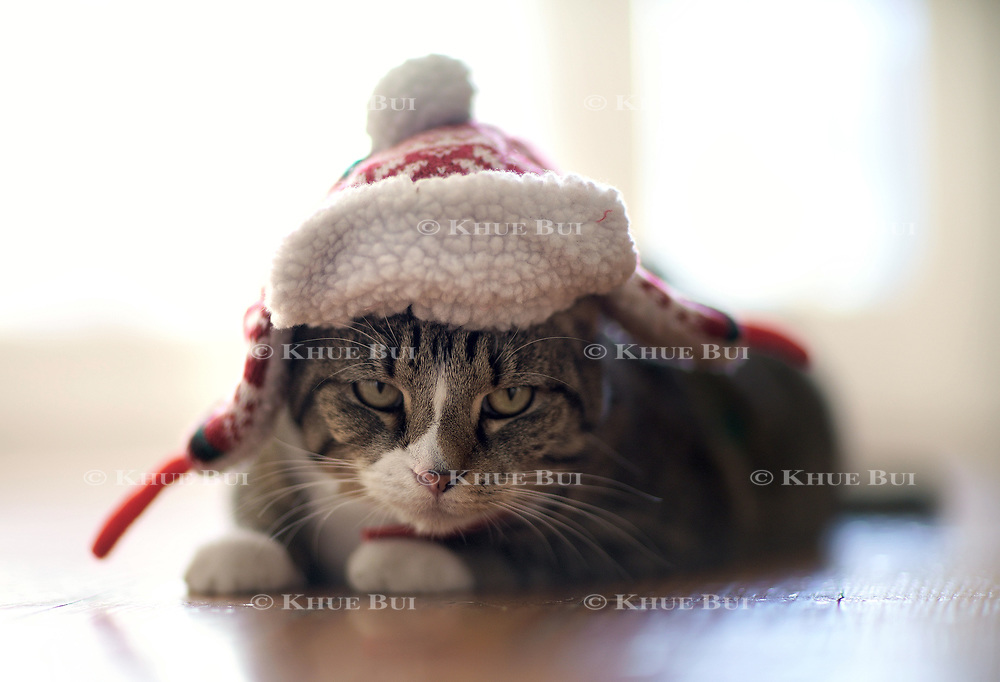 Mocha thinking of ways to get her revenge for the holiday outfit December 22, 2017, in Richmond, VA.<br /> <br /> Photo by Khue Bui