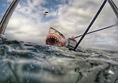 Go Pro Shark Photographer
