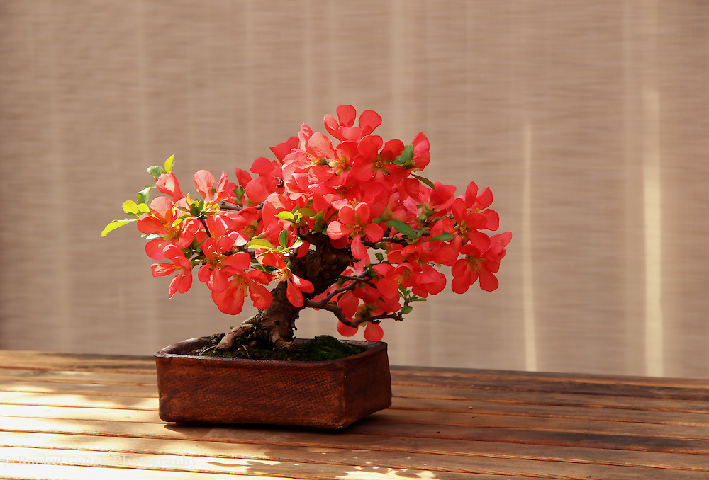 """Art of Bonsai"""