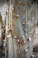 Tree detail in Isoso, Santa Cruz, Bolivia