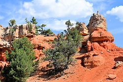 Red Hill, Red Canyon, Dixie National Forest, Utah, USA