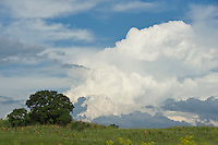 Afternoon thunderclouds building up over the highveld grassveld, Rietvlei Nature Reserve, Gauteng, South Africa