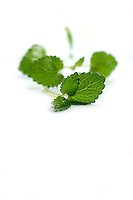 Close up of mint on white background
